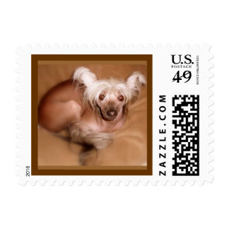 Chinese Crested Stamps