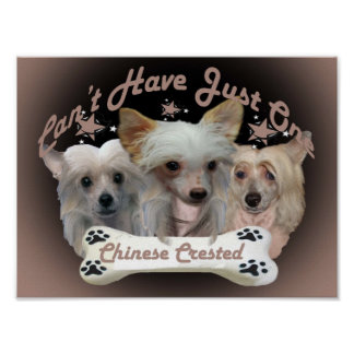Chinese Crested Posters and framed artwork