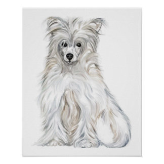Chinese Crested Powder Puff Poster