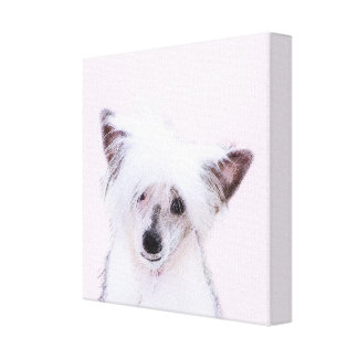 Chinese Crested (Powderpuff) Canvas Print