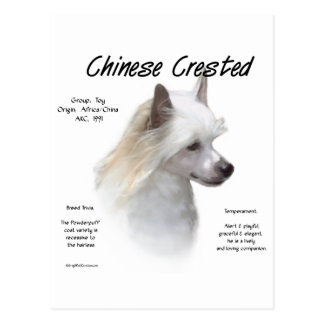 Chinese Crested (powderpuff) History Design Postcard