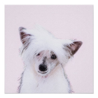 Chinese Crested (Powderpuff) Poster