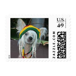 Chinese Crested Rasta Stamp
