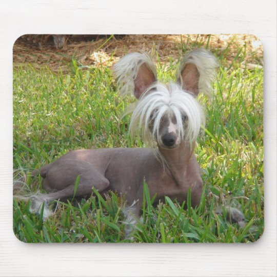 Chinese Crested - Shady Day - Jasper Mouse Pad