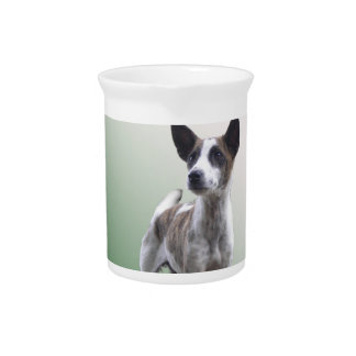 Chinese Crested Show Dog Pitcher