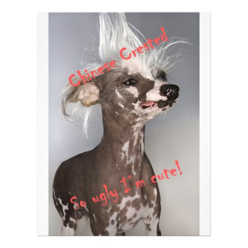 """Chinese Crested So Ugly I'm Cute 8.5"""" X 11"""" Flyer"""