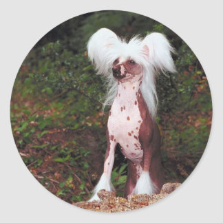 Chinese Crested Stickers