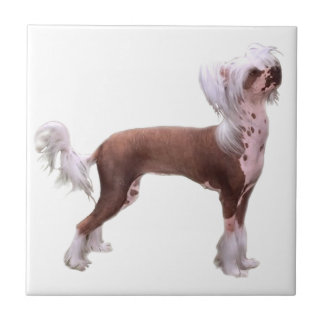 Chinese Crested Ceramic Tiles