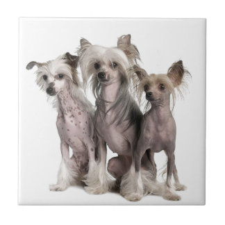 Chinese Crested Tiles