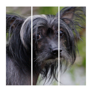 Chinese Crested Triptych