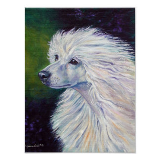Chinese Crested Wall Print
