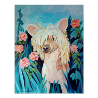 Chinese Crested Wall Print Poster
