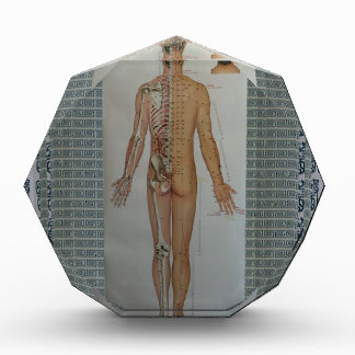 Chinese Doctor Back body acupuncture point map art Acrylic Award