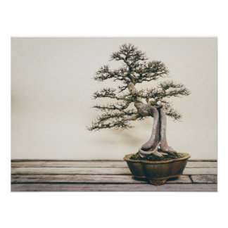 Chinese Elm Bonsai Tree in Winter Poster