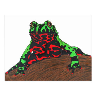 Chinese Fire Bellied Toad Postcard