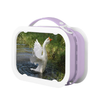 Chinese Goose flapping wings Lunchbox