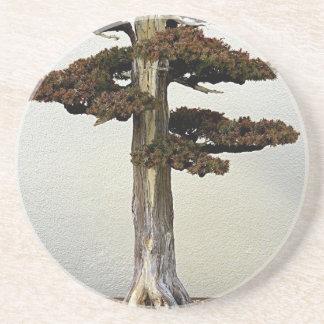 Chinese Juniper Bonsai Tree Beverage Coaster