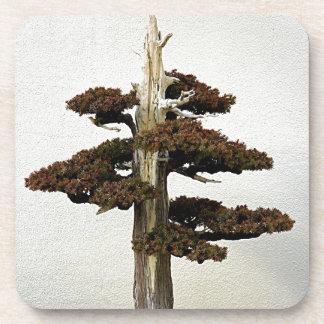 Chinese Juniper Bonsai Tree Drink Coasters