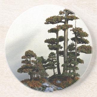 Chinese Juniper Bonsai Trees Drink Coasters