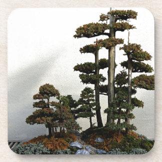 Chinese Juniper Bonsai Trees Drink Coaster