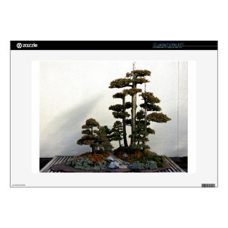 Chinese Juniper Bonsai Trees Decals For Laptops