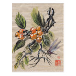 Chinese Loquat Fruit Postcards