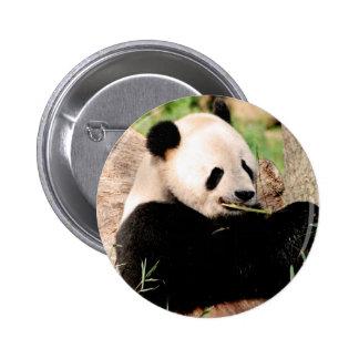 Chinese Panda Buttons