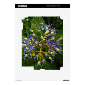 Chinese Quinine Flower Decal For The iPad 2