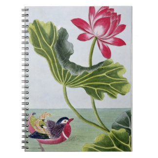 Chinese Red Water Lily, Volume I, plate 82, from ' Notebook