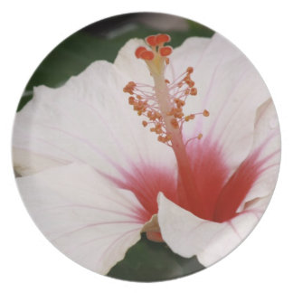 Chinese Rose - Hibiscus Melamine Plate