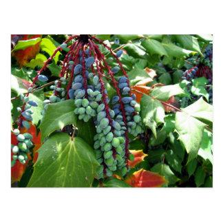 Chinese Scholar's Garden Berries Postcard
