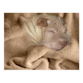 Chinese Shar Pei Camouflage, Wrinkle Hiding Spot Postcard