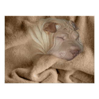 Chinese Shar Pei Camouflage, Wrinkles Hiding Poster