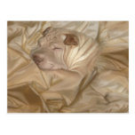 Chinese Shar Pei Camouflaged in Wrinkles Post Card