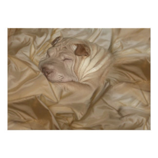 Chinese Shar Pei Camouflaged in Wrinkles Poster