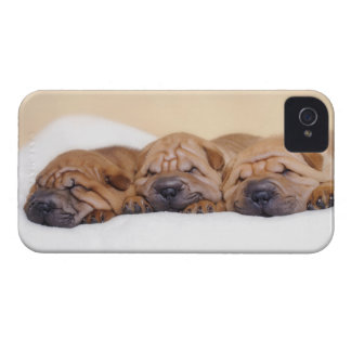Chinese Shar pei puppies iPhone 4 Case-Mate Case
