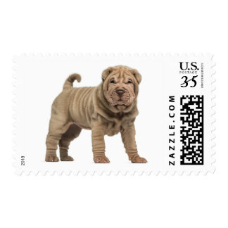 Chinese Shar pei Puppy Dog Love Postage