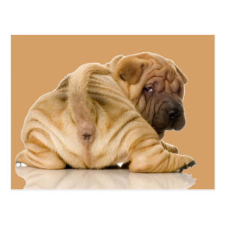 Chinese Shar-pei Puppy Dog Postcard