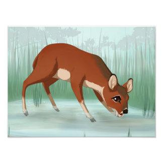 Chinese water deer photo print
