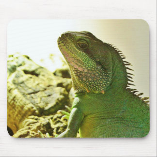 Chinese Water Dragon Mouse Pads