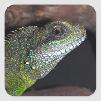 Chinese water dragon square sticker
