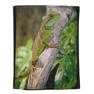 Chinese Water Dragon Wallet