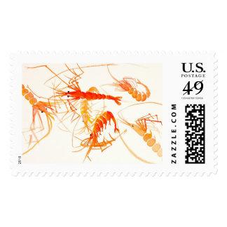 """Chinese Watercolor Shrimp """"Lauren VanArman Stamps"""" Postage Stamps"""