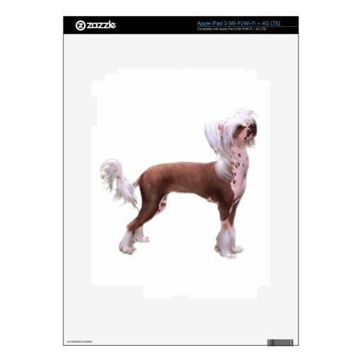 Chino Crested Pegatina Skin Para iPad 3