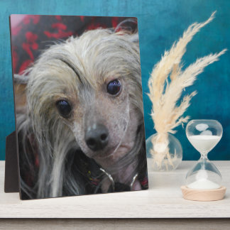 Chino inusual Crested Placas Con Fotos