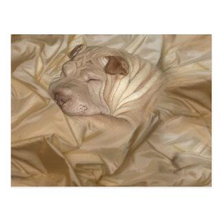 Chino Shar Pei camuflado en arrugas Postales