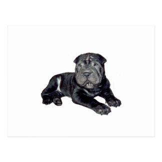 Chino Shar Pei - perrito negro Postal