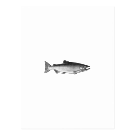 Chinook - King Salmon Logo (black and white) Postcard