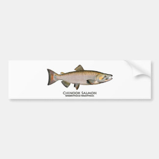 Chinook - King Salmon (spawning phase) Bumper Stickers