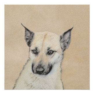 Chinook Puppy (Pointed Ears) Poster